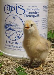 A yellow chick and a bottle of Oasis laundry liquid